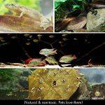 Le comparatif de : Plante aquarium TOP 1 image 1 produit