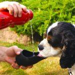 Poisson rouge vacances, faire des affaires TOP 1 image 5 produit