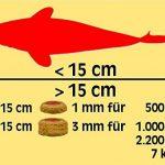 Sera - Koi Professional - Nourriture spécial couleurs pour poissons - Carpes koï - À base de spiruline - 1 x 1 kg de la marque SERA image 3 produit