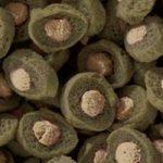 Sera - Koi Professional - Nourriture spécial couleurs pour poissons - Carpes koï - À base de spiruline - 1 x 2.2 kg de la marque SERA image 1 produit