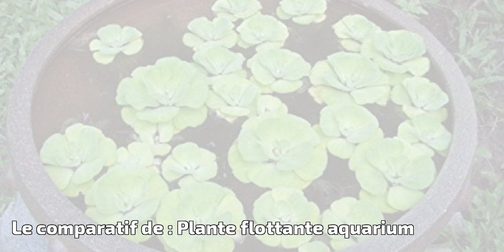 Rosenice Aquarium /étang de jardin flottant Lotus D/écoration 18/cm/ /10/pi/èces